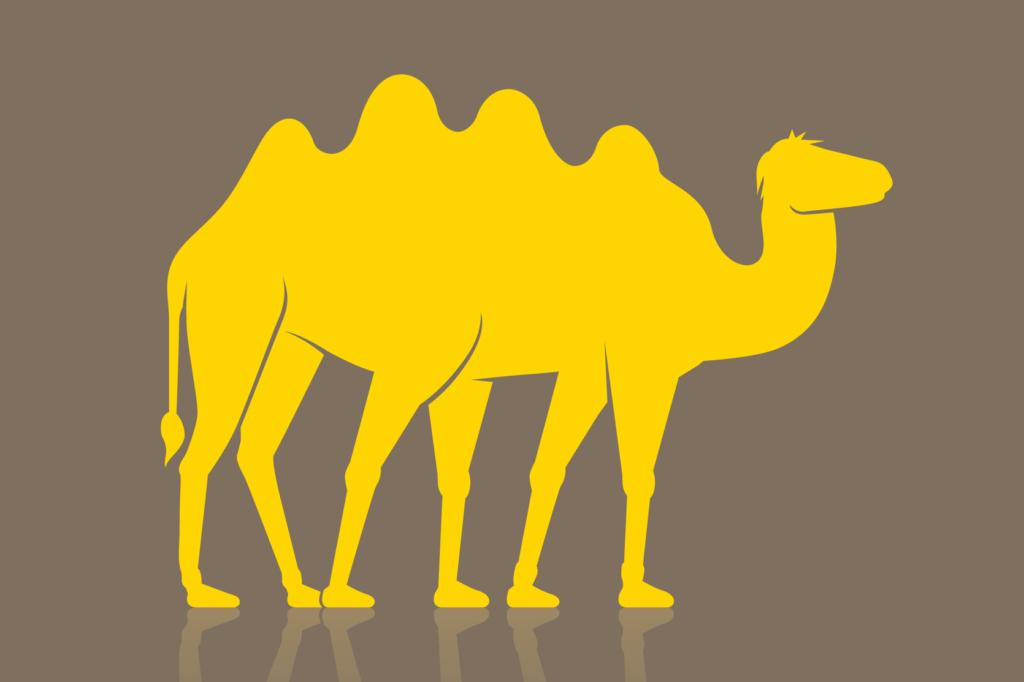 Postkarte Kamel